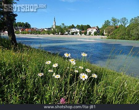 Isar, Daisy Flower