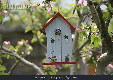 Great Tit, Birdhouse