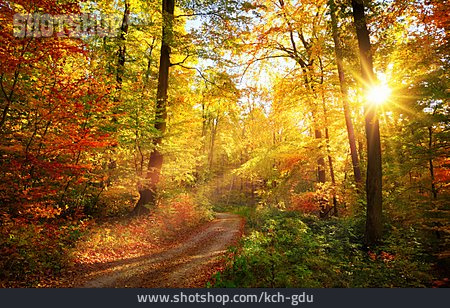Footpath, Forest, Sunbeams, Fall Colors