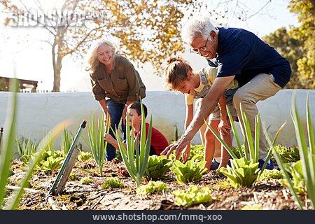 Grandson, Grandparent, Vegetable Garden