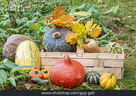 Still Life, Squash, Autumn Decoration