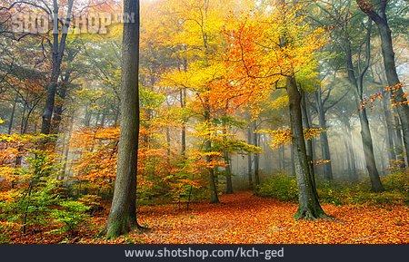 Sunbeams, Autumn Forest