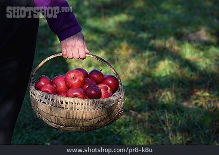 Basket, Harvest, Apples