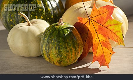Squash, Autumn Leaf