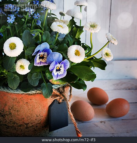 Flowers, Spring Greets
