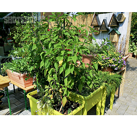 Herb, Flower Boxes, Patio, Raised Bed