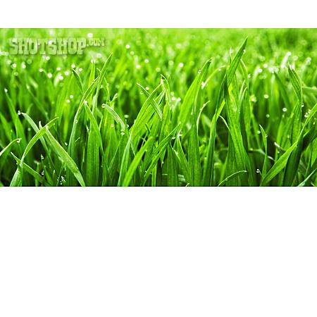 Grass, Blade Of Grass