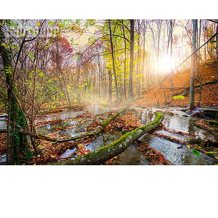 Autumn Forest, Creek