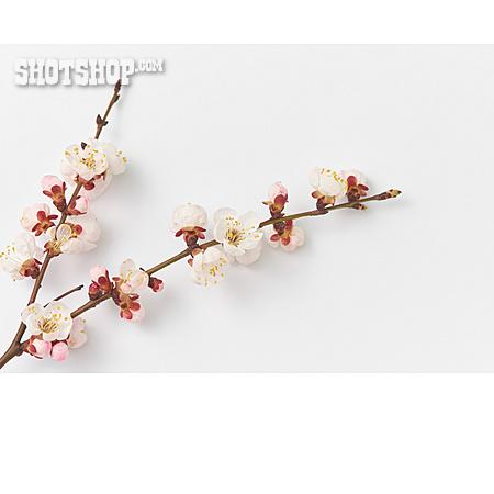 Tree Blossom, Fruit Flower