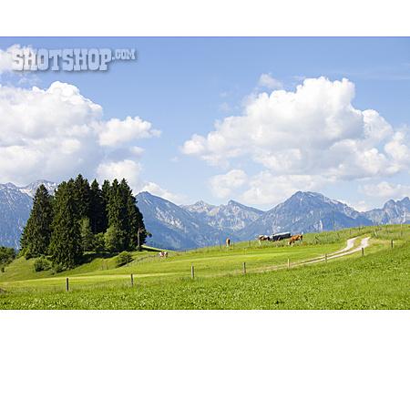 Pasture, Allgau, European Alps