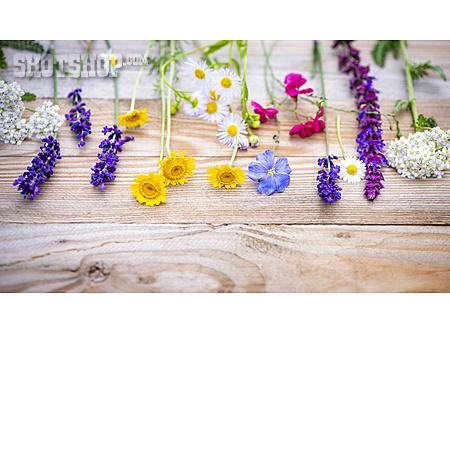 Spring Flowers, Bouquet, Wildflowers