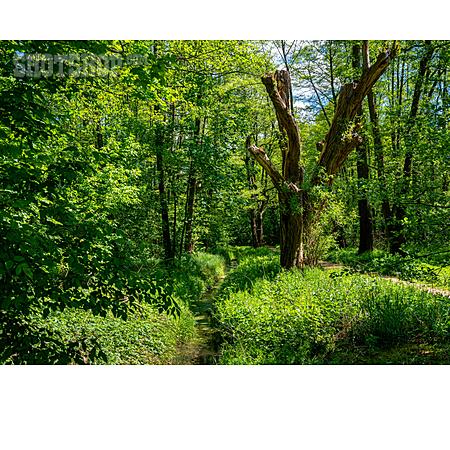 Stream, Forest, Summer