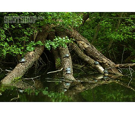Pond, Turtle