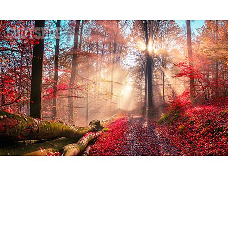 Forest, Autumn, Fog, Sunbeams