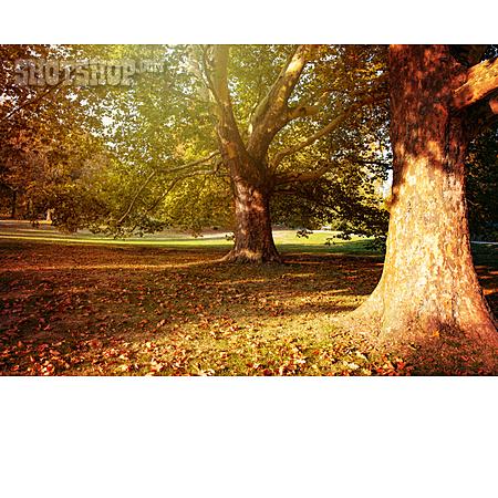 Park, Autumn, Autumn Colors