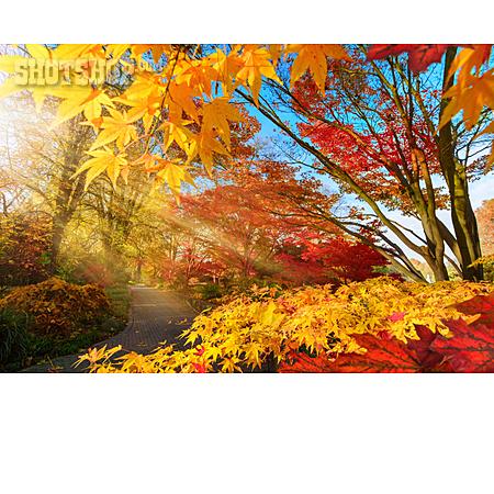 Park, Autumn, Sunbeams