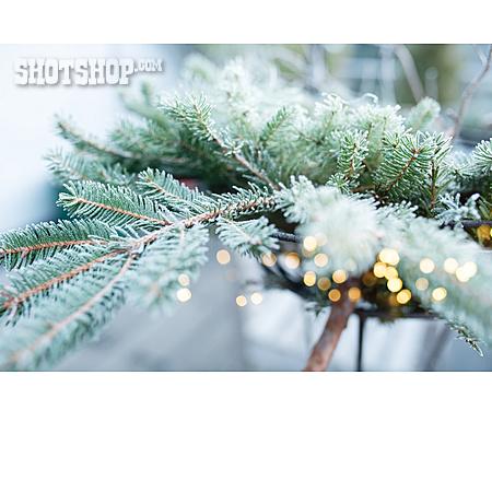 Christmas, Lights, Fir Branch