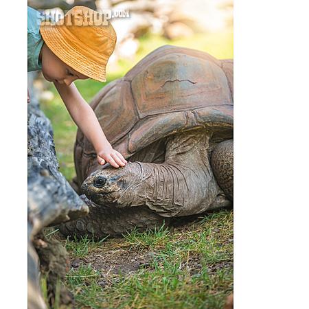 Tortoise, Stroking, Trusting