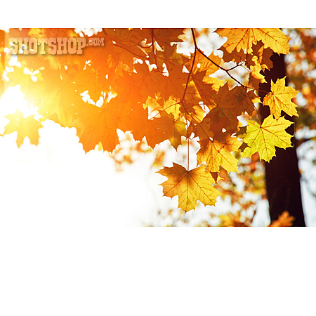 Autumn Leaves, Autumn Colors, Indian Summer