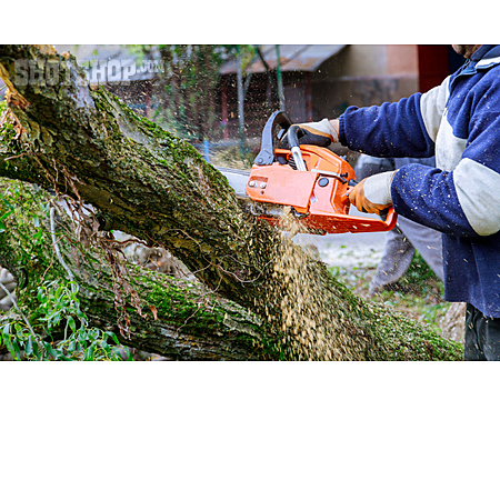 Tree Trunk, Sawing, Chainsaw, Fell Timber