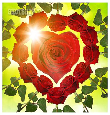 Love, Wedding, Red Rose